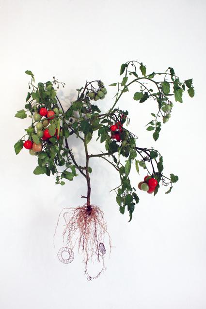 Tomato Factor 60 (Solanum Lycopene Fabricae)